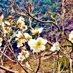 visanavi japan free consultation in kure 2016 spring